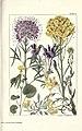 Rocky mountain flowers (Plate 5) (6280206074).jpg