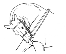 220px-Rollkur_drawing.png
