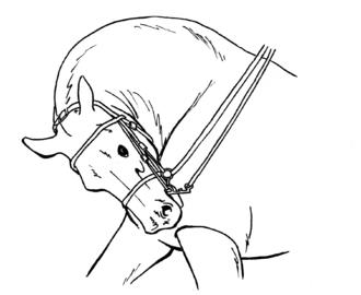 Rollkur - Artist's rendition of a horse undergoing exercise under heavy hyperflexion.
