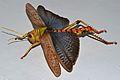 Romaleid Grasshopper (Tropidacris collaris) female (8389070195).jpg