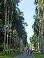 Royal Palm Avenue-Jardin botanique de Kandy (1).jpg
