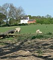 Rural scene in Leicestershire - geograph.org.uk - 417954.jpg