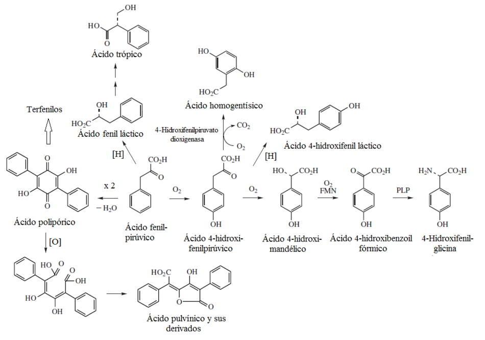 explique la funcion del atp en el metabolismo celular consejos