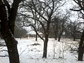Séra kúria télen - panoramio.jpg
