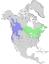 Salix lucida & lasiandra range map 0.png
