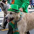 San Francisco St. Patrick's Day Parade 2018-1399.jpg