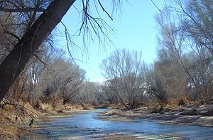 San Pedro Riparian National Conservation Area - Image: San Pedro River Little Boquillas Ranch Arizona 2015
