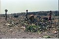 Scavenging - Science City Site - Dhapa - Calcutta 1993-02-27 269.JPG
