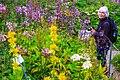 Schynige Platte Botanischer Alpengarten - Sanne is in her element! (10955625914).jpg
