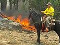 Scouting by horseback (7343250678).jpg