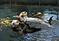 Sea otters Lisbon.JPG