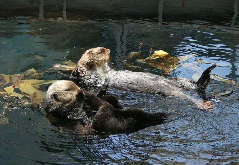 Sea otters Lisbon.JPG