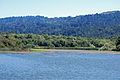 Searsville Reservoir July 2011.jpg