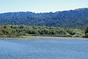 Jasper Ridge Biological Preserve - Looking south across Searsville Reservoir from the dam on Corte Madera Creek and on to Russian Ridge