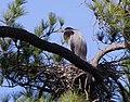Secluded nest (5506032939).jpg