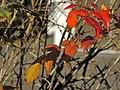 Seebad Tiefenbrunnen 2014-02-20 15-48-56 (P7800).JPG