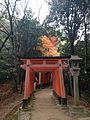Sembon-Torii in Fushimi Inari Grand Shrine 10.jpg