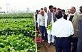 Sharad Pawar visits live demonstrations of crops, at the inauguration of the Pusa Krishi Mela, the farmer fair, at IARI, New Delhi. The Minister of State for Rural Development, Shri Pradeep Jain 'Aditya' is also seen.jpg