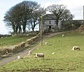Sheep at Bryntwrog farm - geograph.org.uk - 1361125.jpg