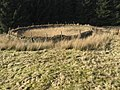 Sheepfold near Cogshead - geograph.org.uk - 692000.jpg