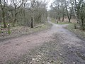 Sherwood Forest - Woodland Footpaths - geograph.org.uk - 722477.jpg