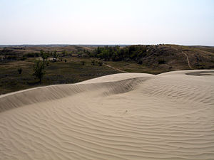 Sand dune in the Great Sand Hills of southern ...