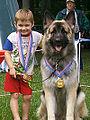 Shiloh Shepherd Dog.jpg