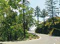 Shimla nature 07.jpg