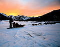Sled dogs sunset.jpg