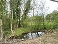 Small pool beside road at Elsted Marsh - geograph.org.uk - 778776.jpg