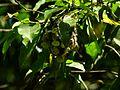 Small sunbird nest.jpg