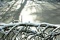 Sneeuw in Meerdaalbos - 372972 - onroerenderfgoed.jpg