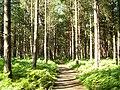 Spinnow wood - geograph.org.uk - 1041717.jpg