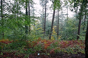 English: St Gwynno Forest Part of the extensiv...