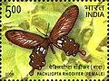 Stamp of India - 2008 - Colnect 157951 - Andaman Clubtail Pachliopta rhodifer - Female.jpeg