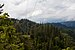Stanislaus National Forest May 2011.jpg