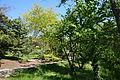 Stanley M. Rowe Arboretum - DSC03395.JPG