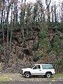 Starr-070908-9272-Eucalyptus globulus-rebounding after fire cinder pit and Tahoe-Polipoli-Maui (24774994302).jpg