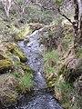 Starr-100412-4593-Holcus lanatus-habit along stream-Waikamoi-Maui (25029082985).jpg
