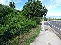 Starr-151019-0289-Cordia subcordata-habit with Kim surveying-Pukalani-Maui (26215949501).jpg