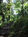 Starr 050107-2828 Setaria palmifolia.jpg