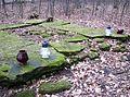 Stary cmentarz Wiązownica Mała 2013 12.JPG