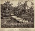 StateLibQld 1 235394 Pomona Bridge across Palm Creek, Herbert River, near Ingham, ca. 1881.jpg