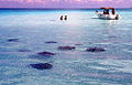 Stingray City, Cayman Islands.jpg