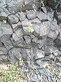 Stone flower.jpg