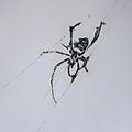 Strange Attractors Spider.jpg