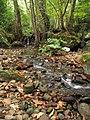 Stream-deciduous forest.jpg
