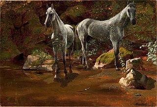 Study of Wild Horses