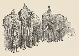 Toomai of the Elephants - Illustration by John Lockwood Kipling (Rudyard's father)