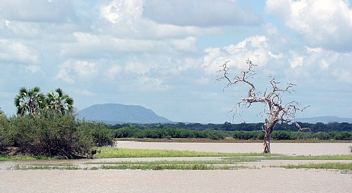 TZ Selous Game Reserve landscape view